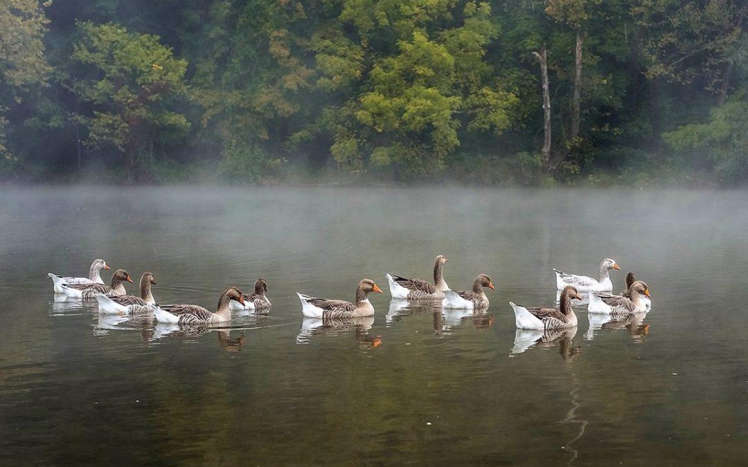 Narrows Duck Pond